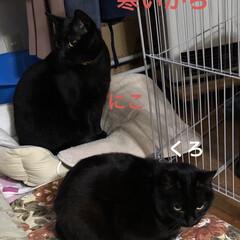 空/猫/めん/にこ/黒猫/くろ/... おはようございます。良いお天気になりまし…(2枚目)