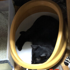 にこ/黒猫/癒し/猫飼のしあわせ 今日のにこはいつもと違う🤣 ご飯食べてそ…