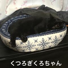 晩ご飯/お昼ご飯/めん/猫/にこ/くろ/... こんばんはです。 今日も一日お疲れ様です…(7枚目)