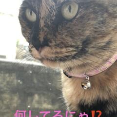 晩ご飯/黒猫/くろ/にこ/めん/猫 こんばんはです。今日も猫たちは元気に過ご…(2枚目)