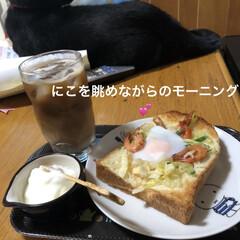 猫/めん/黒猫/にこ/くろ/モーニングセット さぁ朝ごはん😋と座ると目の前に、にこくん…
