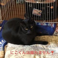空/朝ご飯/にこ/くろ/黒猫/めん/... 猫たちに朝ご飯したらなんとなく耳鳴りが酷…(5枚目)
