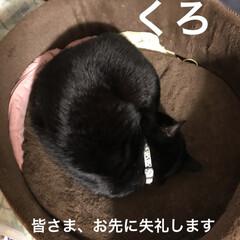 癒し/猫飼いのしあわせ/猫/めん/黒猫/くろ 今日も一日終わろうとしてます。 猫さまた…(1枚目)