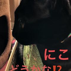 お正月準備/マスク/首輪飾り/猫/めん/猫飼いのしあわせ/... 良いお天気ですね。午前中は冷えてました。…(3枚目)