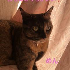 空/朝ご飯/にこ/くろ/黒猫/めん/... 猫たちに朝ご飯したらなんとなく耳鳴りが酷…(6枚目)