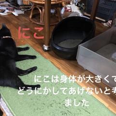 猫様トイレ事情/黒猫/にこ/簡単/暮らし トイレの縁に足乗せて💩してたにことめん。…(2枚目)