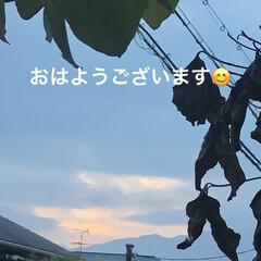 今朝の風景/モーニングセット/猫/めん/黒猫/にこ/...