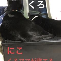 くろ/にこ/黒猫/癒し/猫飼いのしあわせ/猫 くろとにこの関係性。にこはどちらかという…