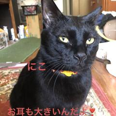 癒し/猫飼のしあわせ/にこ/黒猫 朝から旦那さんがコンロの設置をしてくれて…(3枚目)