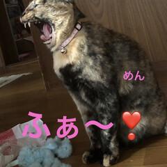朝ご飯/空/黒猫/くろ/にこ/猫/... おはようございます☀ 良いお天気です。日…(3枚目)
