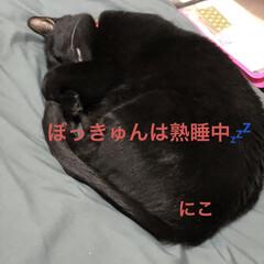 晩ご飯/めん/猫/にこ/くろ/黒猫 今日はゆっくり猫たちと過ごせた。 よく寝…(3枚目)