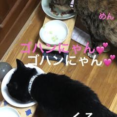 朝ご飯/空/晩ご飯/にこ/くろ/黒猫/... おはようございます☀ 連休明け平常が戻り…(6枚目)