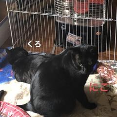ストーブ/にこ/くろ/黒猫/めん/猫 とりあえずゆっくりしようとリビングのスト…(2枚目)