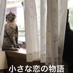 癒し/猫飼いのしあわせ/にこ/黒猫/めん/猫/... とっても素敵なシーンが撮れた❣️ めんと…