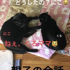 めん/猫/にこ/くろ/黒猫 こんばんはです。 今日も一日お疲れ様です…(1枚目)