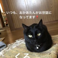 くろ/にこ/黒猫/癒し/猫飼のしあわせ/おうちごはん/... ごろごろしてるといつのまにか隣にいたくろ…