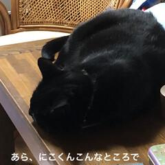 にこ/黒猫/めん/猫/癒し/猫飼のしあわせ 連投すみません。猫たちに朝ご飯あげてそこ…(2枚目)