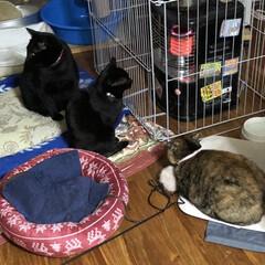 ストーブ前/くろ/にこ/黒猫/めん/猫/... おはようございます😊 冬らしい寒さです♪…(3枚目)