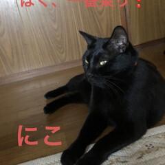 くろ/にこ/黒猫 よーく寝てた3匹たち。目が開くと今度はお…