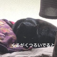 黒猫/くろ/にこ/猫/めん にこもめんもくろが大好き💕 少し涼しくな…(4枚目)