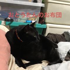 猫飼さんのしあわせ/癒し/にこ/黒猫 唯一無二のにこくん。可愛い可愛い男の子で…(2枚目)