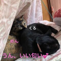 空/黒猫/にこ/くろ/猫/めん 今日はいいお天気。久しぶりに坂道下って駅…(7枚目)