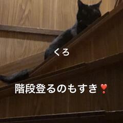 黒猫/くろ/にこ/猫/めん 朝ご飯食べて遊びタイム。(9枚目)