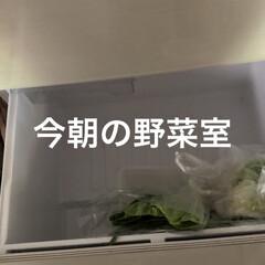 野菜室/冷蔵庫の中 昨日野菜室がガラガラになり明日のカレー曜…