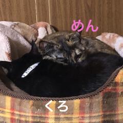 節分/巻き寿司/猫飼さんのしあわせ/癒し/くろ/黒猫/... 今日は節分。前に巻き寿司作った時は旦那さ…(4枚目)