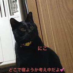 紫芋/庭/ルーク/くろ/にこ/黒猫/... おはようございます。天気のせいかなんとな…(4枚目)