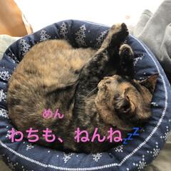 朝ご飯/めん/猫/にこ/くろ/黒猫 おはようございます☀ 良いお天気です。朝…(7枚目)