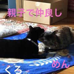 親子/猫/めん/猫飼のしあわせ/癒し/黒猫/... くろといると家に入る前はなでるのも気をつ…