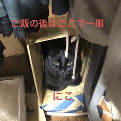 晩ご飯/お昼ご飯/めん/猫/にこ/くろ/... こんばんはです。 今日も一日お疲れ様です…(5枚目)
