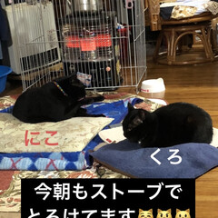 昼寝タイム/ストーブ/朝ご飯/黒猫/にこ/くろ/... あーもうお昼過ぎてる💦いつもちびの世話し…