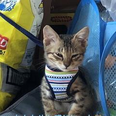 保護猫/ちび/猫/めん 今までで1番の接近。見てる私がハラハラド…(7枚目)