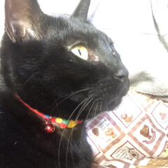 癒し/猫飼いのしあわせ/黒猫/にこ いつになく私につきまとうにこ。 リズム遊…(7枚目)