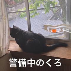 朝ご飯/空/黒猫/くろ/にこ/猫/... おはようございます☀ 気持ちのいい朝です…(2枚目)