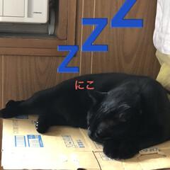 めん/猫/にこ/くろ/黒猫 昨夜明日はリビング掃除しようと決めてたの…(2枚目)