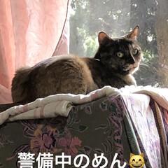 朝ご飯/空/黒猫/くろ/にこ/猫/... おはようございます☀ 気持ちのいい朝です…(3枚目)