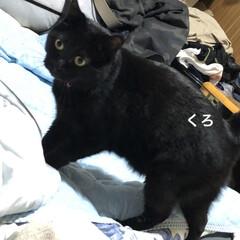 晩ご飯/黒猫/くろ/にこ/猫/めん こんばんはです。今日も一日お疲れ様です。…(3枚目)