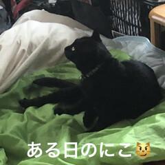 にこ/黒猫 いつも穏やかで慎重なにこ。ぼくちゃん感が…