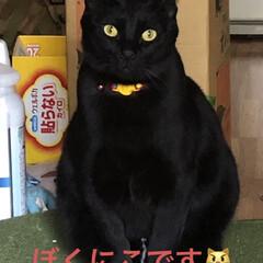 癒し/猫飼のしあわせ/にこ/黒猫 朝から旦那さんがコンロの設置をしてくれて…(1枚目)
