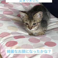 ちび/癒し/猫飼いのしあわせ/猫 ちびを保護して約二十日経ちました。 目や…(2枚目)