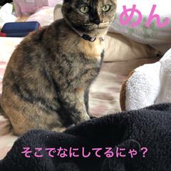 保護猫/ちび/猫/めん 今までで1番の接近。見てる私がハラハラド…(2枚目)