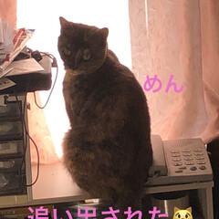 癒し/猫飼いのしあわせ/めん/猫/黒猫/にこ/... 今日は本当に良いお天気です。リビングの片…(3枚目)