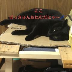 晩ご飯/めん/猫/黒猫/くろ/にこ こんばんはです。今日も一日お疲れ様でした…(3枚目)