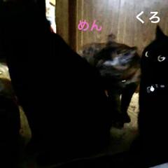 お昼ご飯/にこ/くろ/黒猫/めん/猫/... 少し遅めの昼ごはん。袋ラーメンに残り物乗…(5枚目)