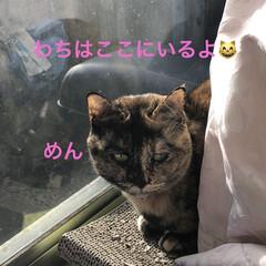 空/猫/めん/にこ/黒猫/くろ/... おはようございます。良いお天気になりまし…(6枚目)