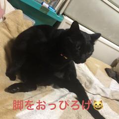 猫飼いのしあわせ/癒し/にこ/黒猫 今日のにこくん。 私が寝てる間お利口にし…(3枚目)
