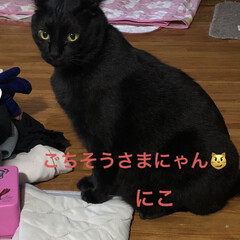 猫/めん/黒猫/くろ/にこ 夕方の猫さまたち。お腹が空くと私のそばに…(5枚目)
